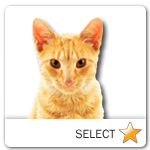 Red Tabby Cat for cat ecards