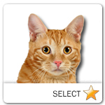 Red Kurilian Cat for cat ecards