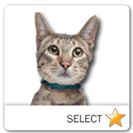 Savannah Cat for cat ecards