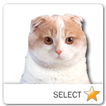 Scottish Fold Cat for cat ecards