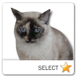 Mixed Breed Cat for cat ecards