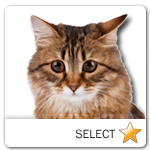Siberian Cat for cat ecards