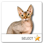 Sphynx Cat for cat ecards