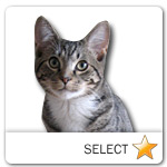 Grey Tabby Cat for cat ecards