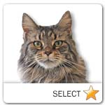 Brown Tabby Maine Coon Cat for cat ecards
