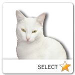 White Short Hair Cat for cat ecards
