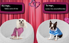 Funny anniversary ecards couple ~ Dog cards: birthday thank you holidays & more