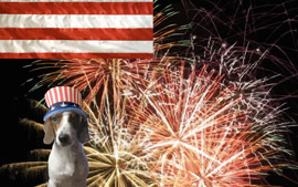 Invite All Your Furry Friends Over For A July 4th Party Or Wish Your Canine  Crew A Happy Fourth Of July With A Sloppy Kiss Ecard Starring A Labrador ...
