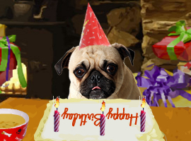 Dog Ecards Happy Birthday Congratulations