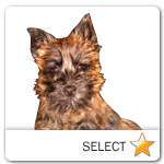 Cairn Terrier for dog ecards
