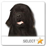 Newfoundland for dog ecards