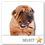 Chinese Shar-Pei for dog ecards