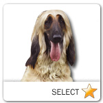 Afghan Hound for dog ecards