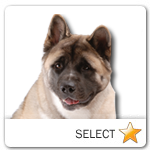 Akita for dog ecards