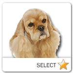 American Cocker Spaniel for dog ecards