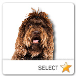 Barbet for dog ecards