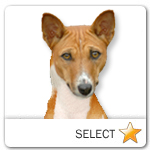 Basenji for dog ecards