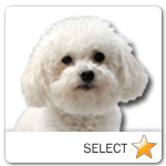 Bichon Frise for dog ecards