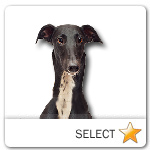 Black Greyhound for dog ecards