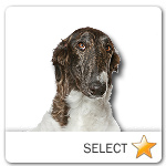 Russian Wolfhound for dog ecards