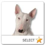 Bull Terrier for dog ecards