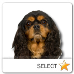 Cavalier King Charles Spaniel for dog ecards