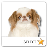 Japanese Chin for dog ecards