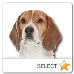 Beagle for dog ecards