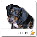 Black and Tan Dachshund for dog ecards