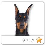Standard Doberman Pinscher for dog ecards