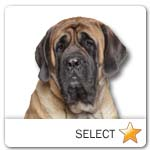 English Mastiff for dog ecards