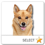 Finnish Spitz for dog ecards