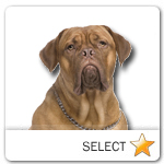 Dogue de Bordeaux for dog ecards