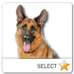 German Shepherd for dog ecards
