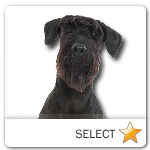 Giant Schnauzer for dog ecards