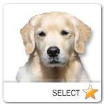 Light Golden Retriever for dog ecards