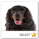 Gordon Setter for dog ecards