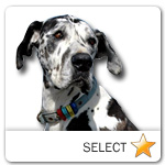 Great Dane for dog ecards