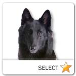 Groenendael Belgian Shepherd for dog ecards
