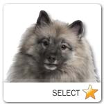 Keeshond for dog ecards