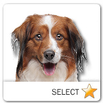 Kooikerhondje for dog ecards