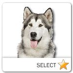 Alaskan Malamute for dog ecards