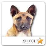 Belgian Malinois for dog ecards
