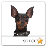 Miniature Pinscher for dog ecards