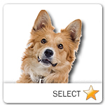 Mixed Breed Dog for dog ecards