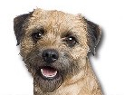 Border Terrier for dog ecards