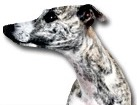 Greyhound for dog ecards