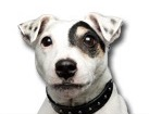 Jack Russell Terrier for dog ecards