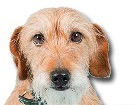 Wirehaired Mixed Breed Dog for dog ecards