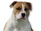 American Staffordshire Terrier for dog ecards